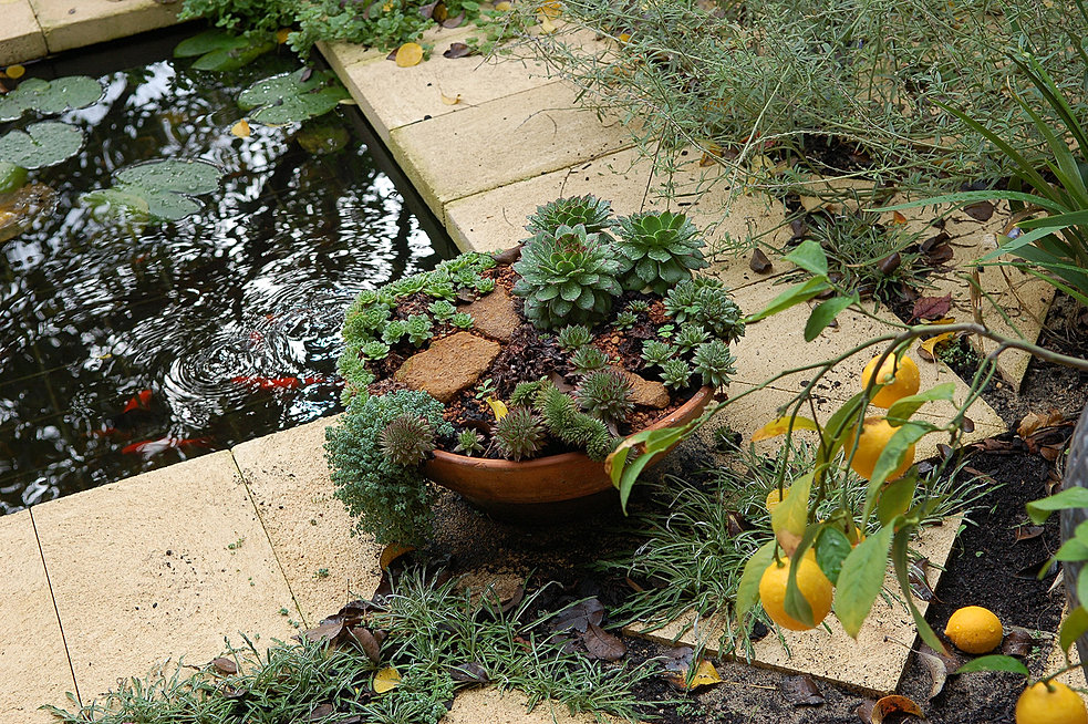 Landscape design perth sorrento sorrento garden designs for Garden landscaping perth