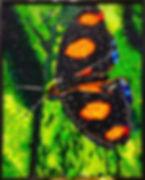 Painél, quadros, obra de arte, borboleta, recycle, tampas de pet, eventos,decoração, reciclado, reciclagem, sustentavel, meio ambiente