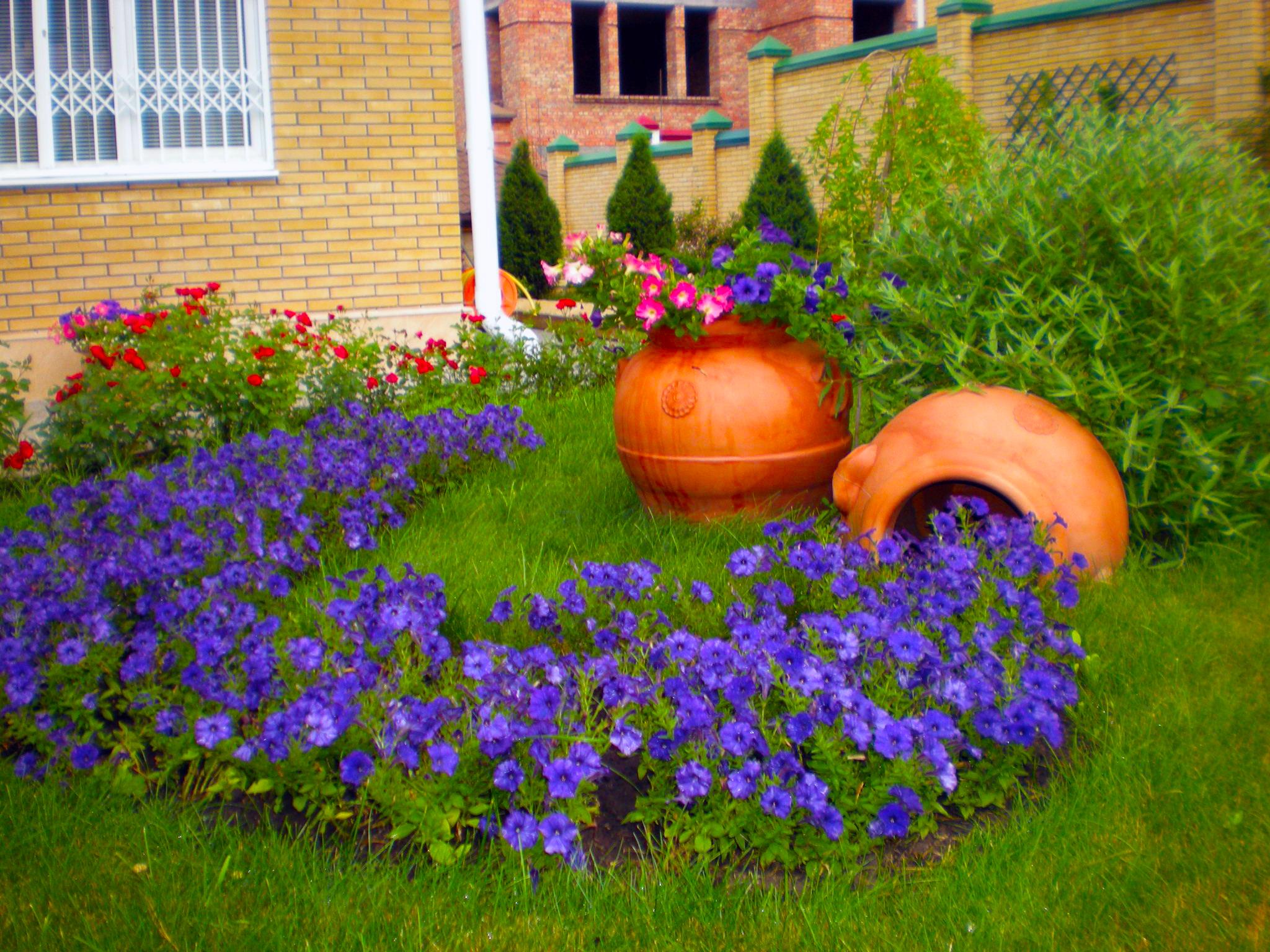 Какие цветы посадить на даче, чтобы цвели все лето? Фото 22