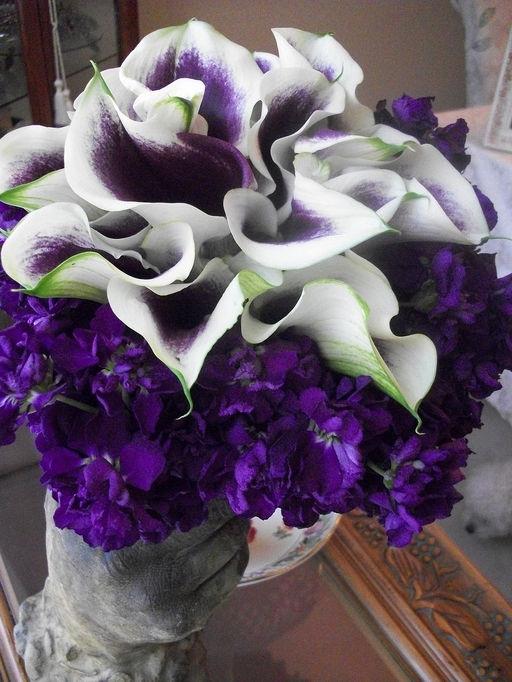 Purple - 21