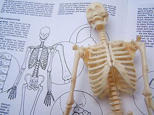 skeleton-study-1-1423858-640x480.jpg