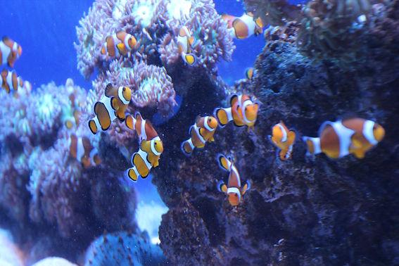 2018-11-14 Palma Aquarium 92.JPG