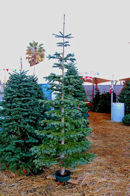 HUNTINGTON BEACH PREMIUM FRESH CUT CHRISTMAS TREES WREATHS ...