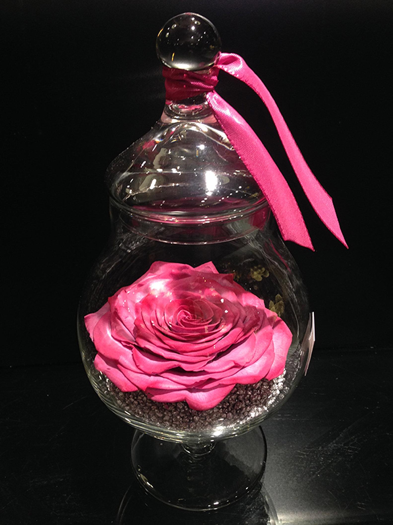rose stabilisee roses eternelles auxerre yonne. Black Bedroom Furniture Sets. Home Design Ideas