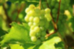 grapes-276070_1920.jpg