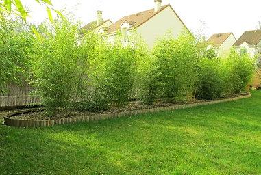 vente de bambous vente bambous vente bambous pas cher. Black Bedroom Furniture Sets. Home Design Ideas