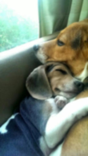 beaglelove.jpg