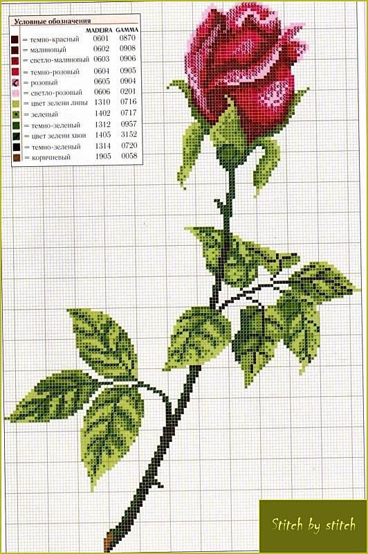 схема вишивки цветы розы
