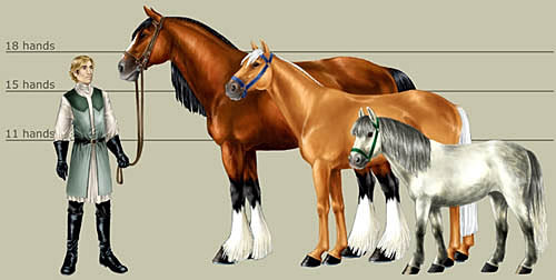 maries-equine | Size, Colors, Patterns & Markings