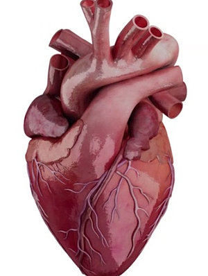 real human heart beating - photo #22