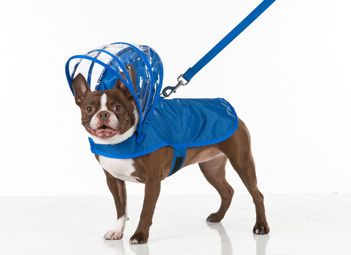 Push+Pushi_Dog-Raincoat_Blue_2.jpg