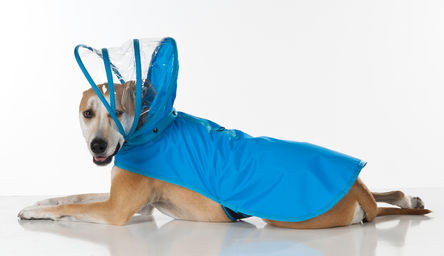 Push Pushi_Raincoat_Light-Blue.jpg