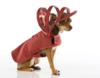 Push-Pushi_Dog_Raincoat_Maroon_01.jpg