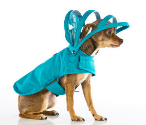 Push-Pushi_Dog_Raincoat_Teal_01.jpg