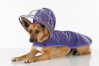 Push+Pushi_Dog_Raincoat_Purple_1.jpg