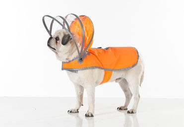 Push+Pushi_Dog-Raincoat_Safety-Orange_2.jpg