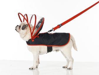 Push+Pushi_Dog_Raincoat_Black_1.jpg