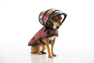 Push_Pushi-Red_Plaid-Raincoat_1.jpg