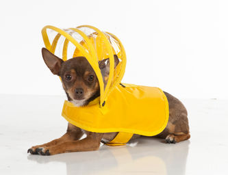 Push+Pushi_Dog_Raincoat_Yellow_2.jpg