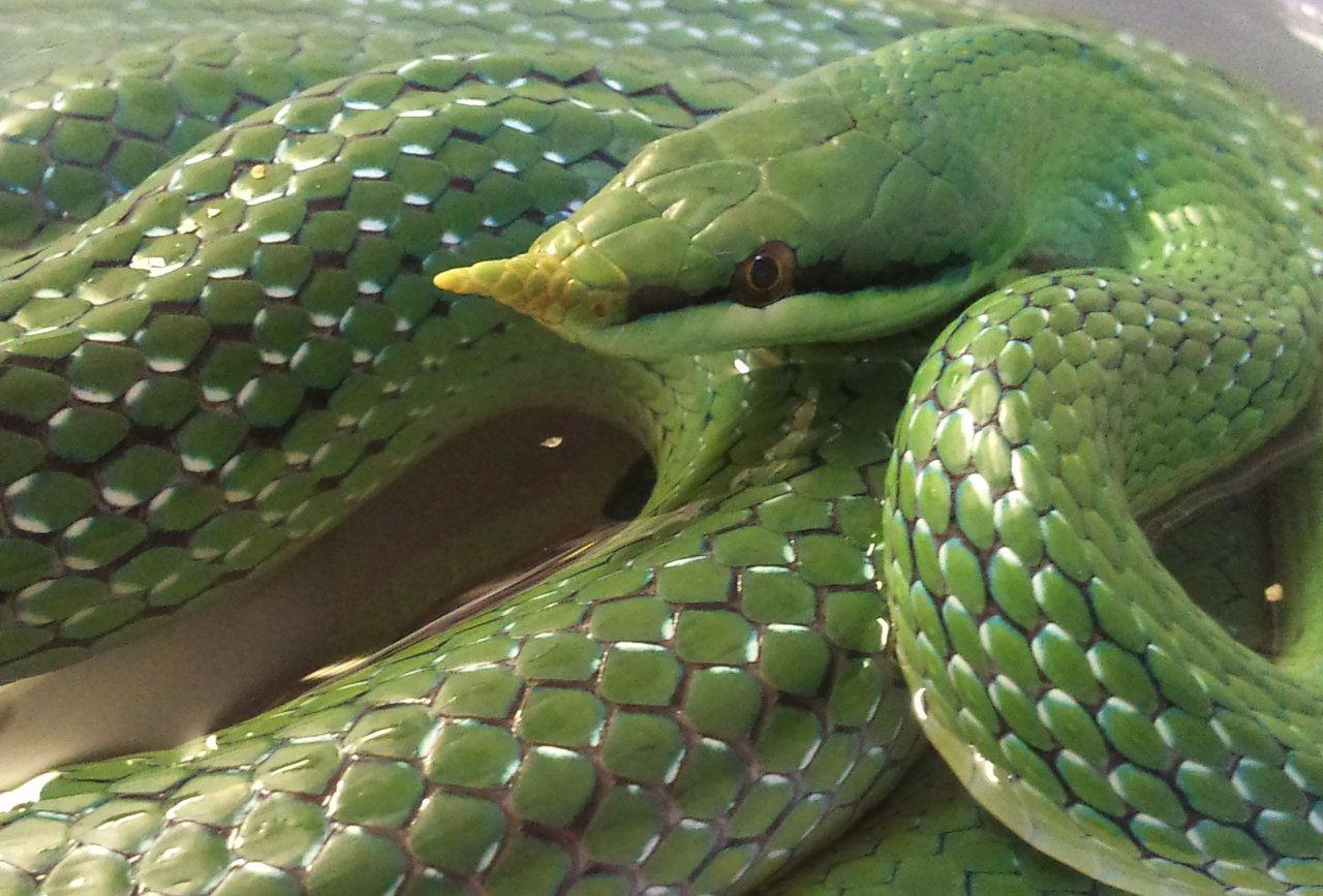 how to say snake in mandarin