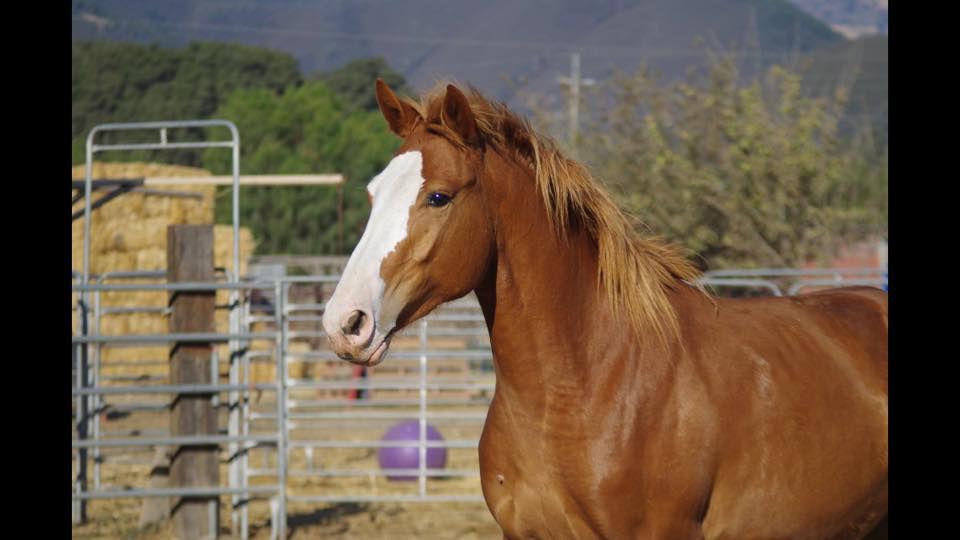 Auntie  the wonder horse
