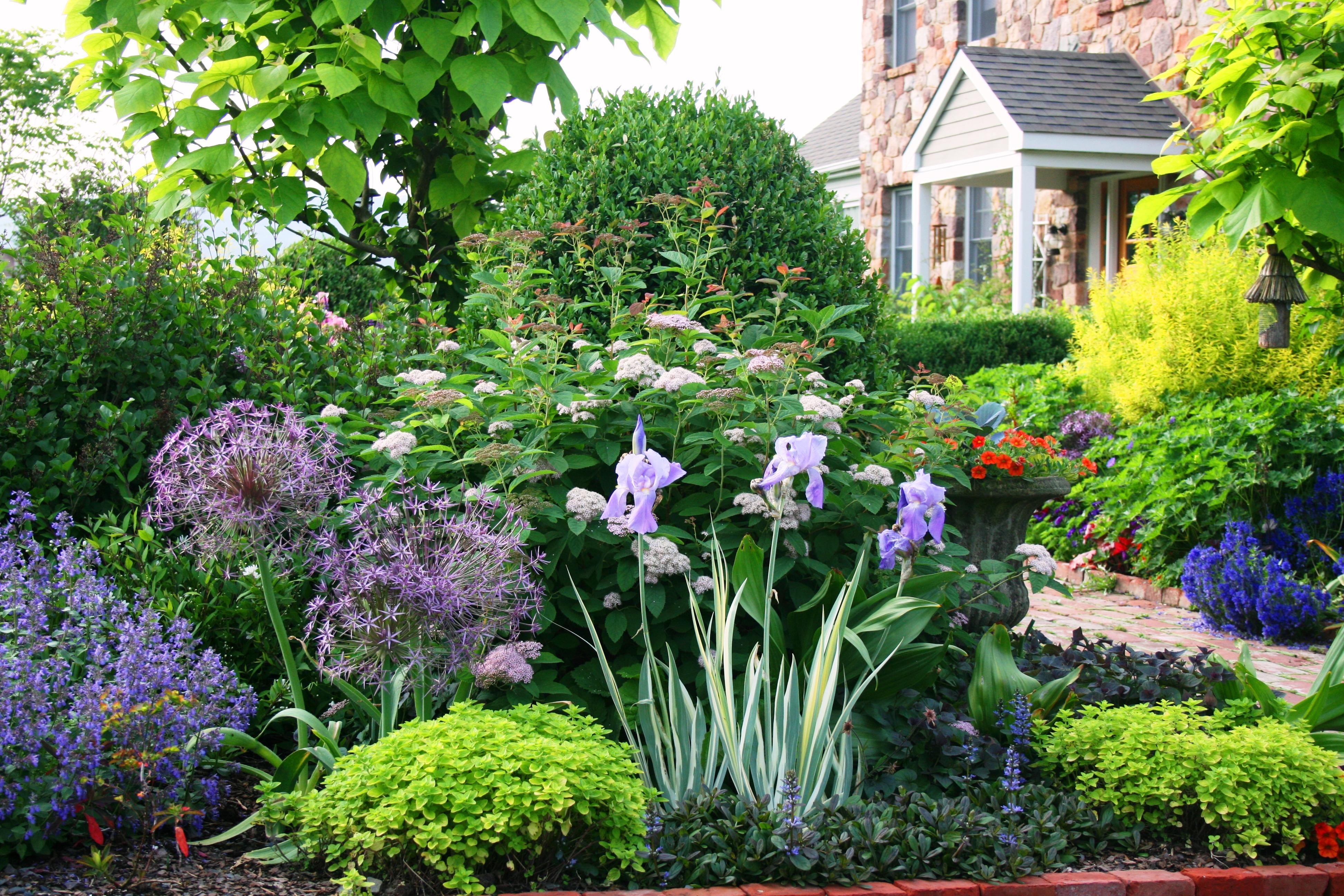 Цветы в саду и огороде дизайн