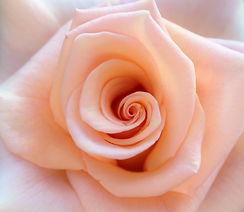 hand-nature-blossom-plant-flower-petal-8