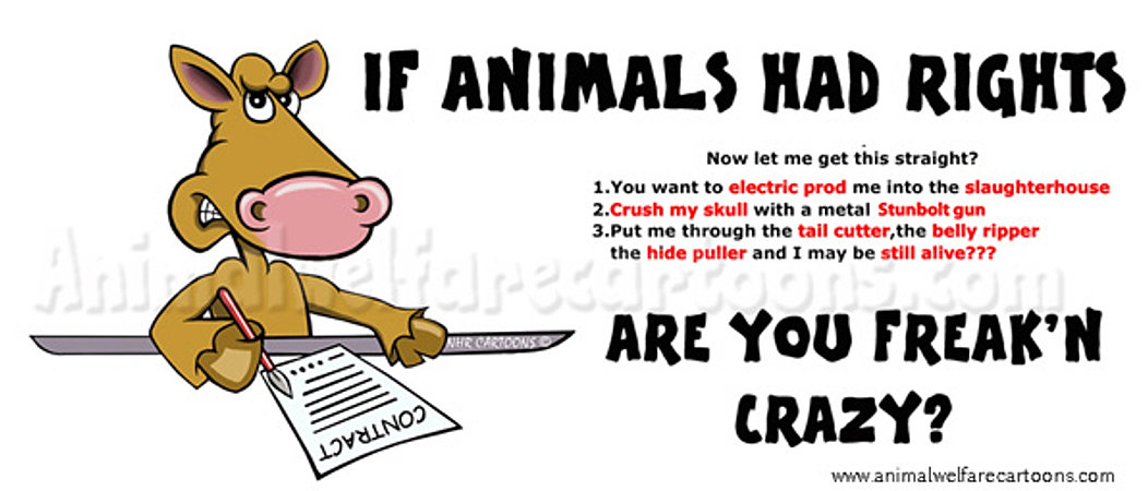 Image result for Animal rights cartoons
