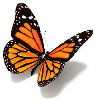 monarch white.jpg