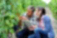 Vitivalor Solution : viticulteurs