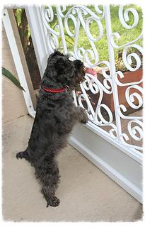 Screen Door Pet Guard, Camco Screen Door Pet Guard, Camco Rv Screen Door  Grill