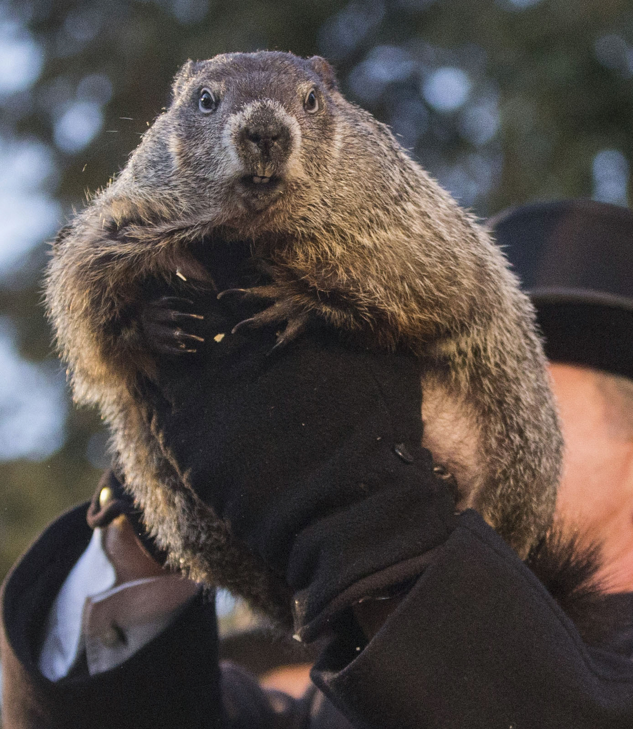 happy groundhog day home headwaters charitable trust