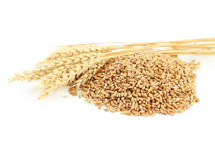 bigstock-Ears-Of-Wheat-And-Wheat-Grains-