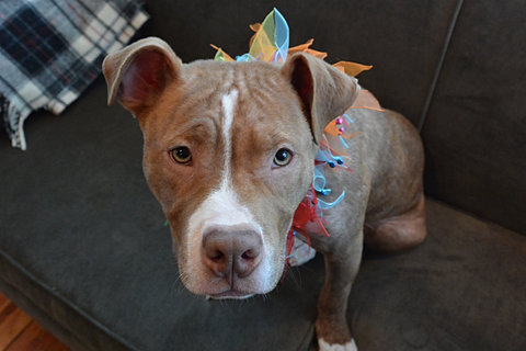 pitbulls lovers not fighters December 4, 2014 december 4, 2014 courtneyxrae leave a comment me, myself, i about me resume december 4, 2014 courtneyxrae leave a comment my story about me my life began when i was born on september, 21st 1994 i have an older brother and sister who i love very dearly and a mother who i would do anything for i was born in.