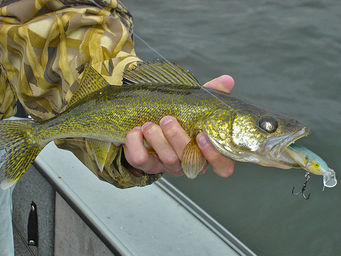 Walleye fishing tips loess hills outfitters hunting for Walleye fishing tips