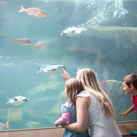 动物园水族馆的水