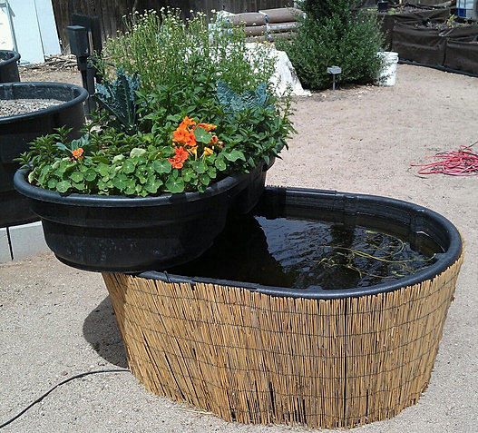 Local roots aquaponics systems for Arizona aquaponics