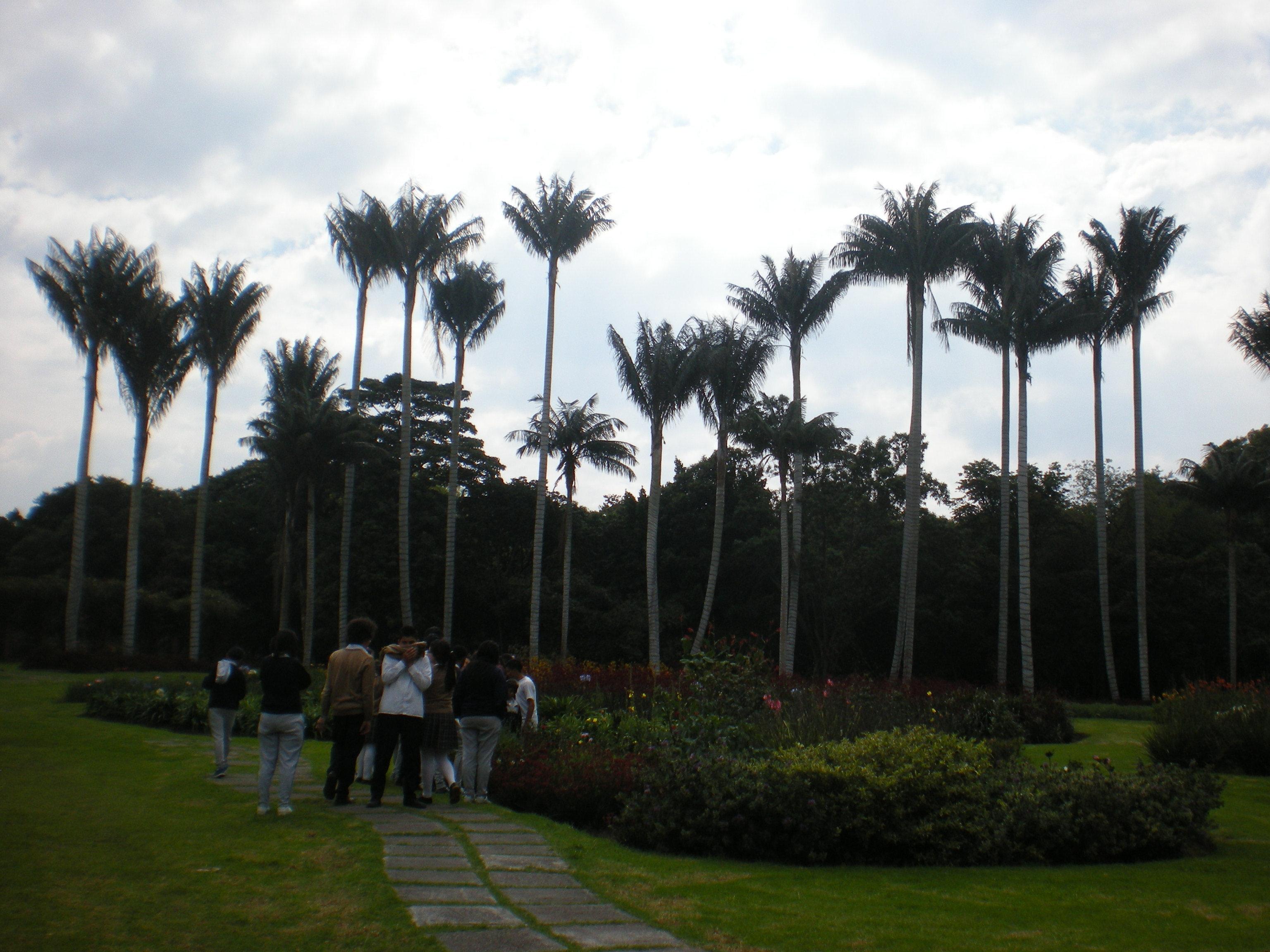 Marco tulio fernandez salida al jard n bot nico jcm for Jardin botanico cursos