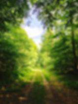 nature-2699254_640.jpg