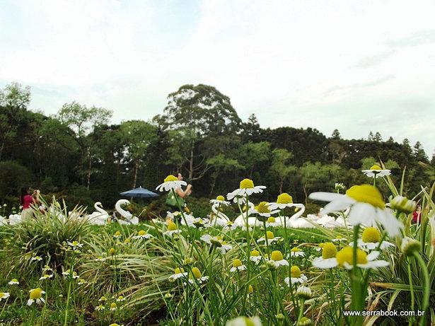 Flores no Lago Negro