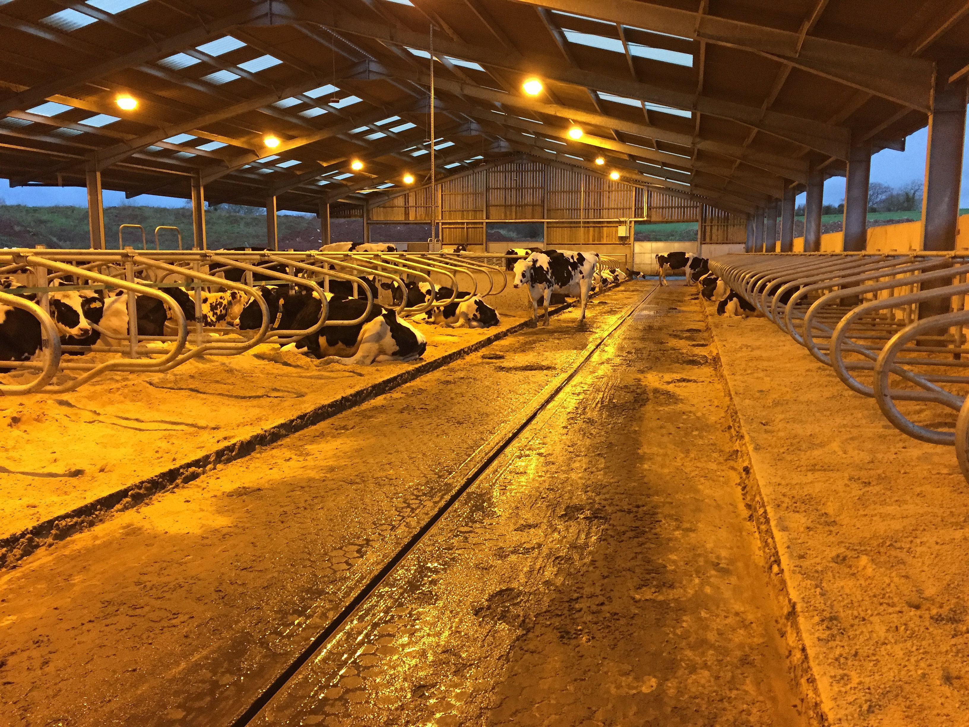 Cowplan South West Uk Dairy Housing With Ivor Davey