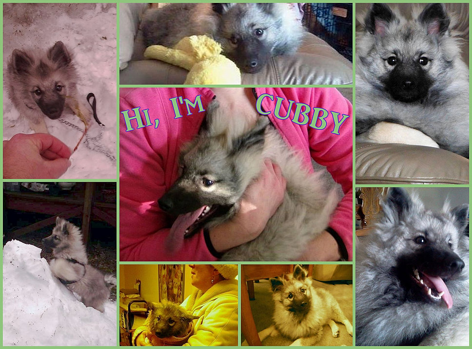 Cubby collage.jpg