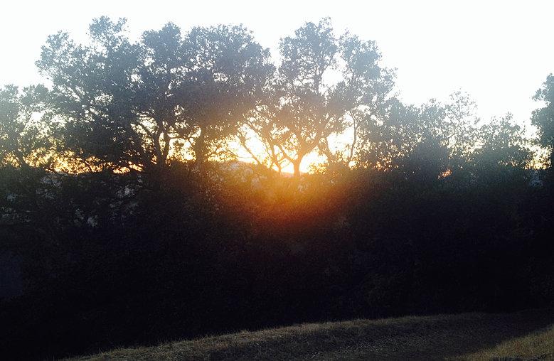 Summer Solstice sunset through trees
