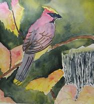autumn cardinal student_edited.png
