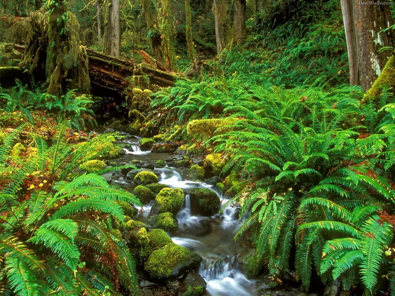 Wix.com Tropical Rain Forest created by tropicalrainforestma based ...