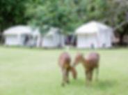 Två Deer främre white Tent