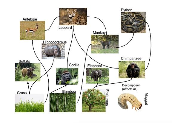 rainforest | Ecosystem Animals