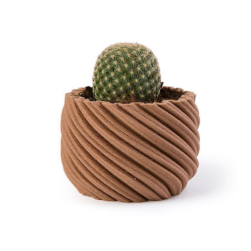 NAHLED cactus copy.jpg