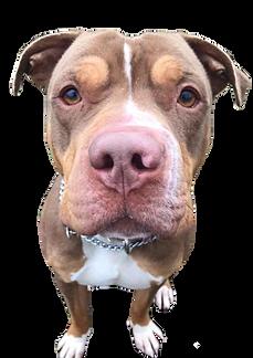 Dog Kennel Road Media Pa