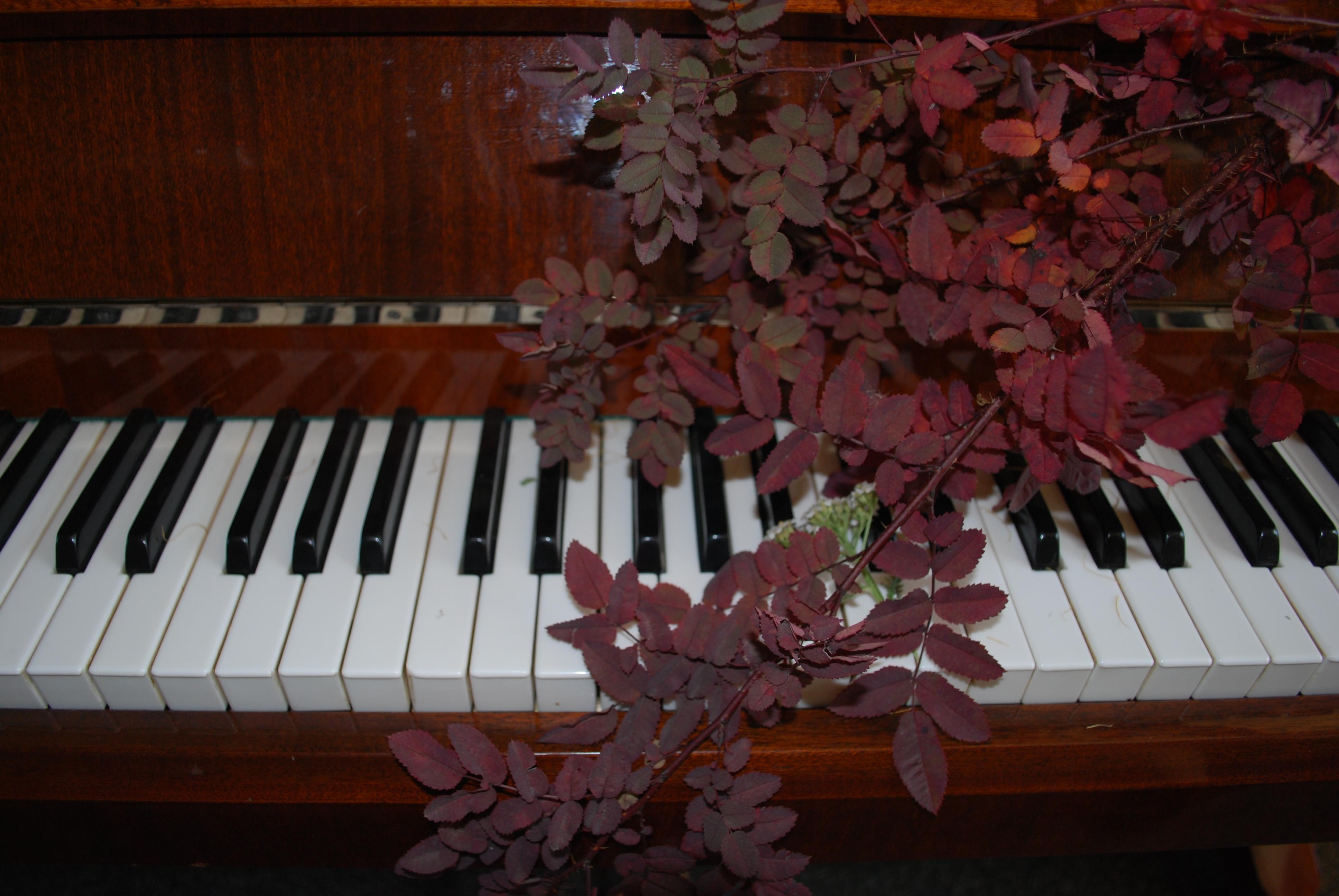 Осенняя музыка